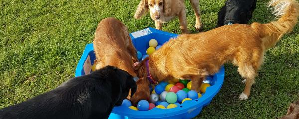 ball pit at enrichment academy